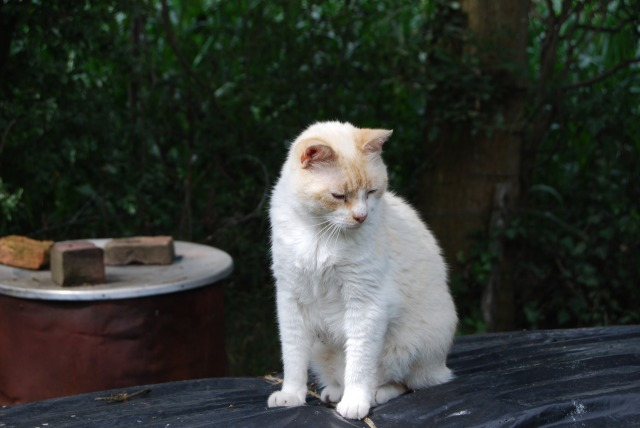 cat-1101747_1920.jpg