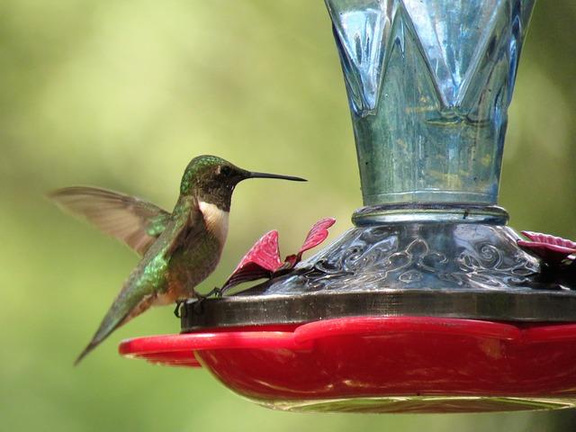 bird-2705463_640 (1)