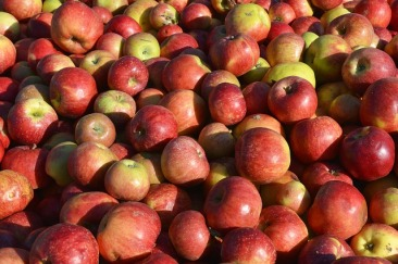 apple-3670680_640