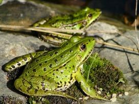 frog-3067925_640
